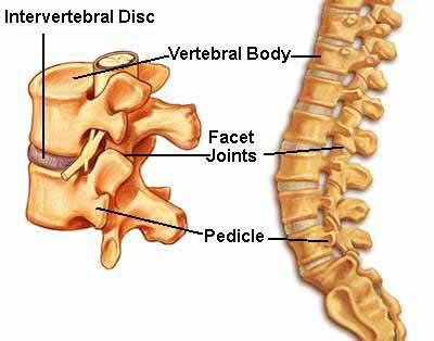Understanding Spinal Anatomy: Intervertebral Discs